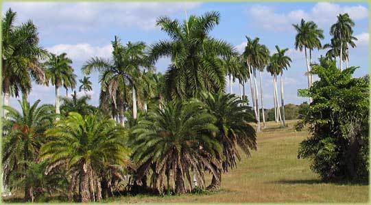 National Botanic Garden Havana Cuba