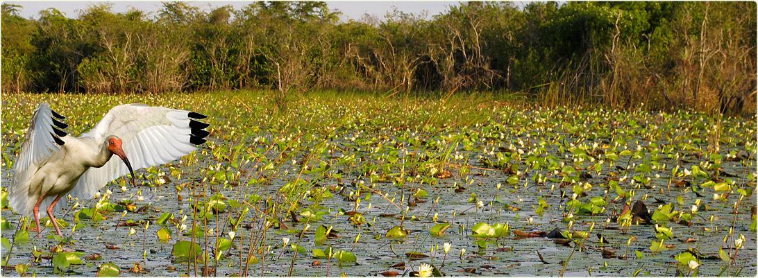Image result for cienega de zapata wetlands, Cuba